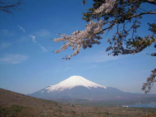 Sakuratofuji1