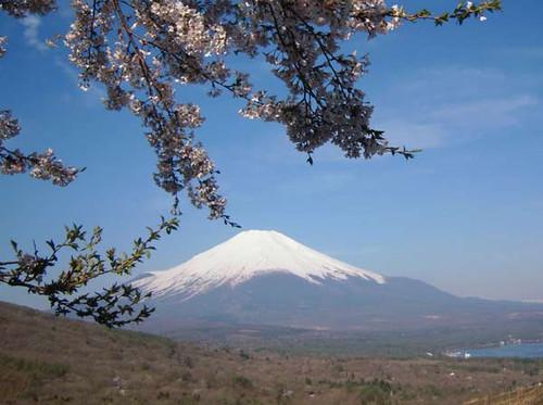 Sakuratofuji2