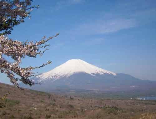 Sakuratofuji4